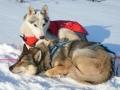 Термо-накидка для собак